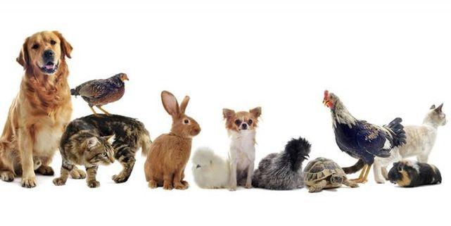 Cómo Enseñarle a los Niños sobre LOS ANIMALES | ParaNiños.org