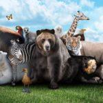 Métodos para enseñarle a los niños los animales