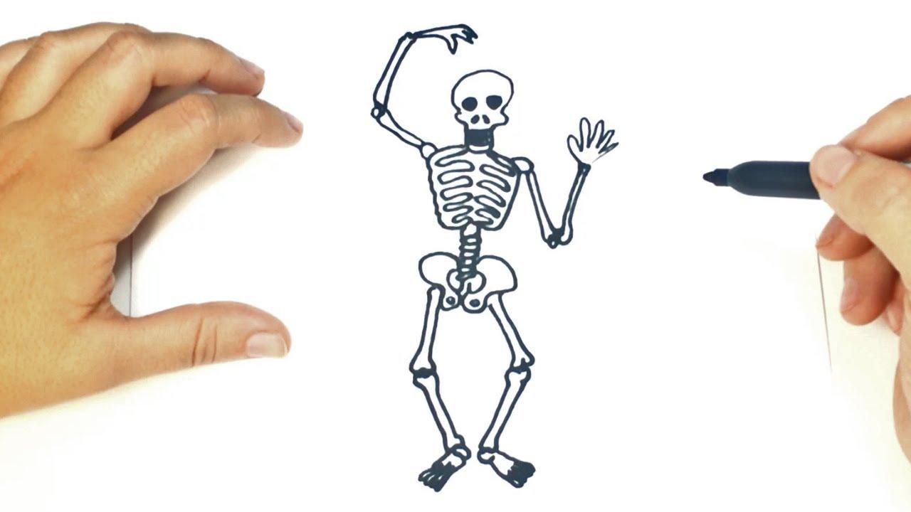 Cuántos Huesos tiene el Cuerpo Humano? ¿Cómo se llaman? | ParaNiños.org