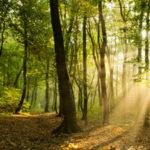 Bosque: Qué es, tipos y características de los bosques