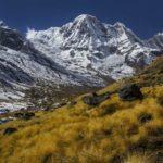Tundra: Qué es, tipos y características de las tundras